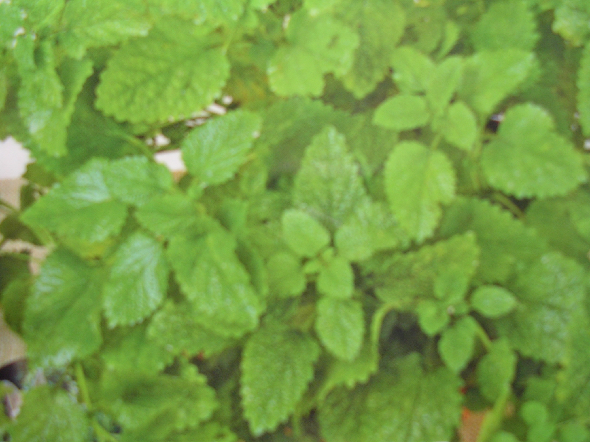 Groveflora Herb Seeds India