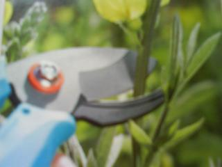 Groveflora Gardening Tool Resources